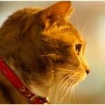 猫の口内炎の症状、原因 治療・治し方 予防