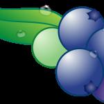 ブルーベリーの口内炎への治療・予防効果について